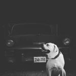 מאוד חיות מחמד כלבים מחפש זיווג זכר - ad - עמוד 2 XS-66